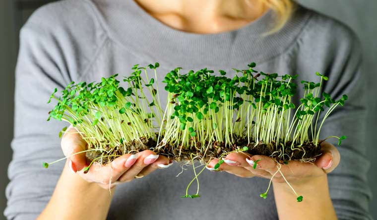 Build confidence growing your own food with microgreens.