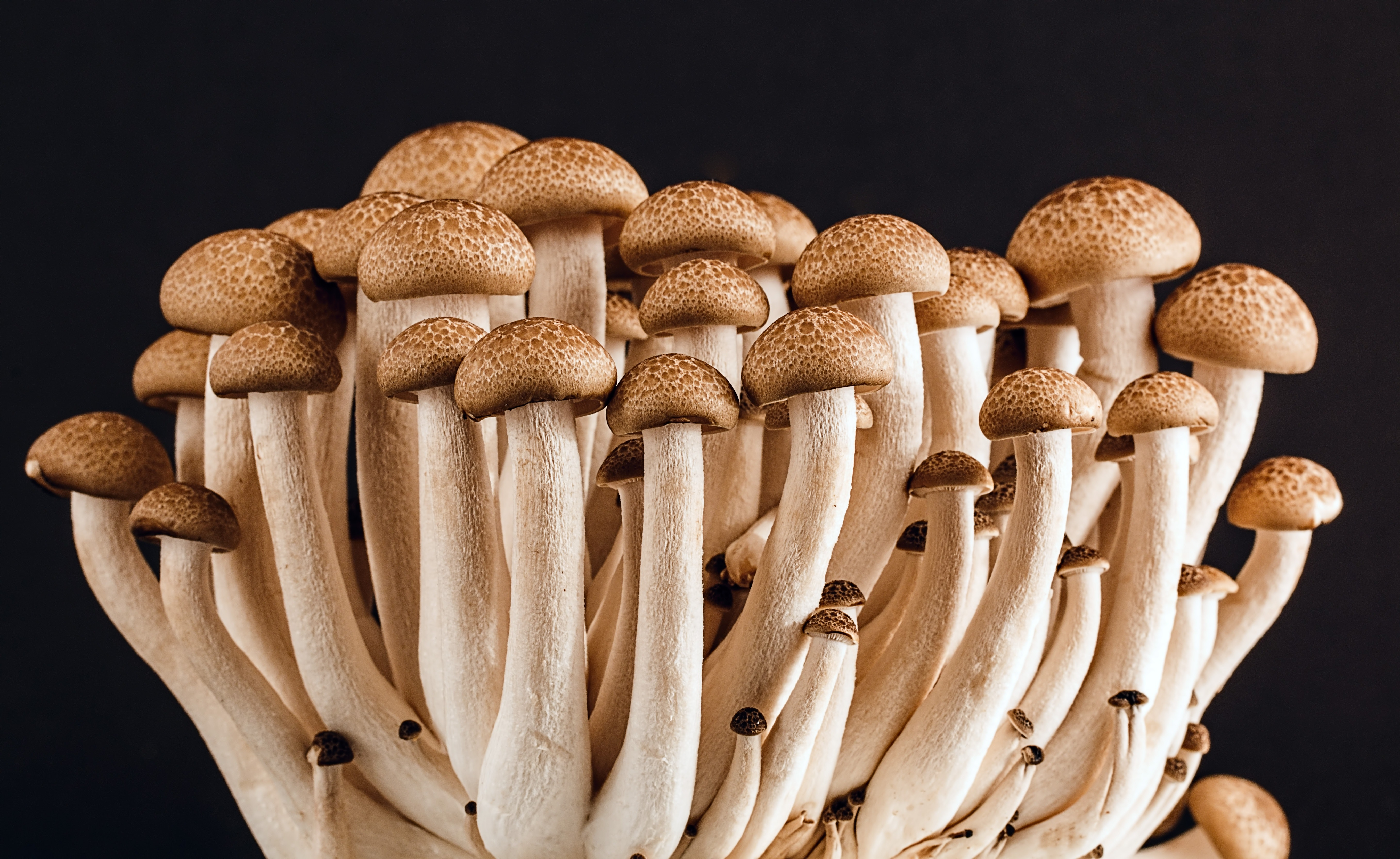 Mushrooms are a fascinating and rewarding thing to grow at home